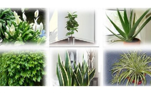 The top 6 plants you must have in your house