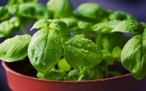 Herbs You Can Grow at Home